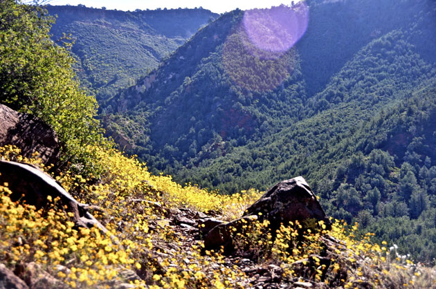 Casner Canyon Trail Image